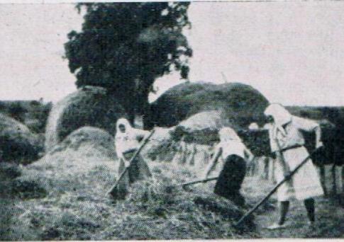 Frauen auf dem Feld in Brienne