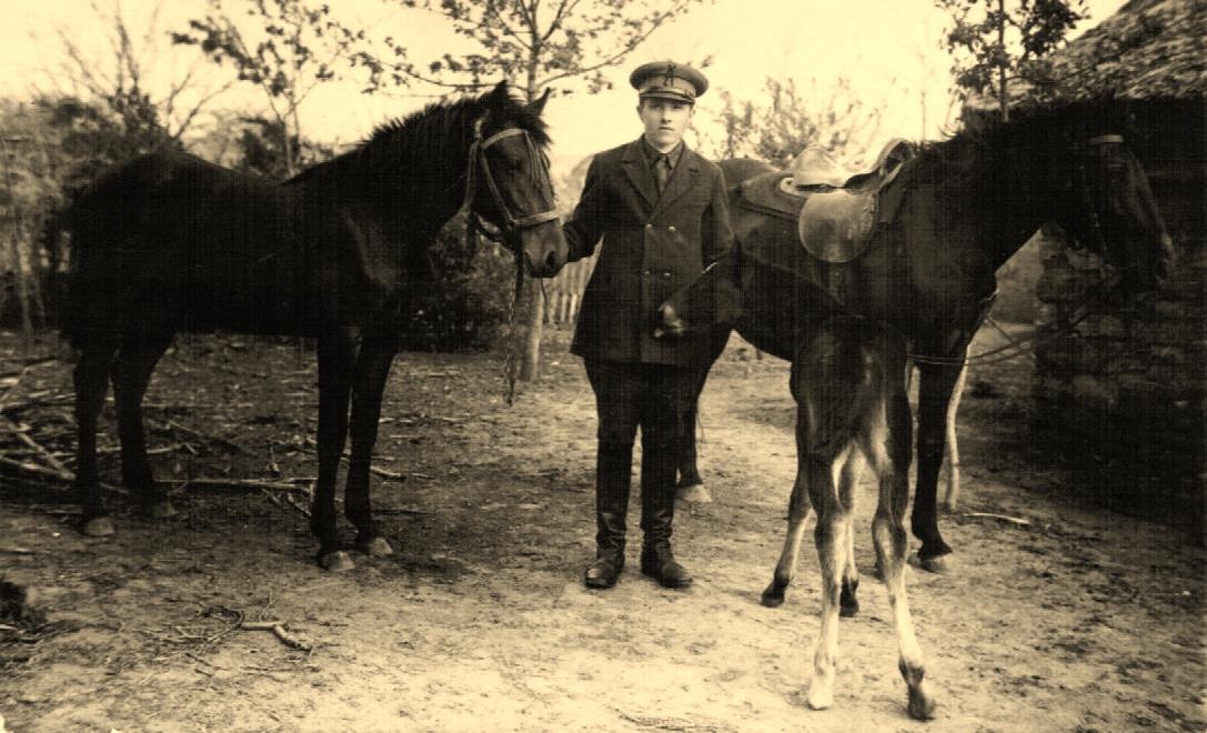 Pferde Bessarabien, August Kuch